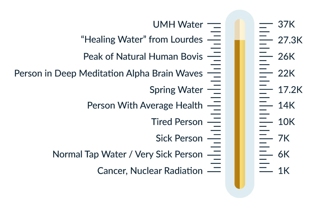 UMH Bovis Scale